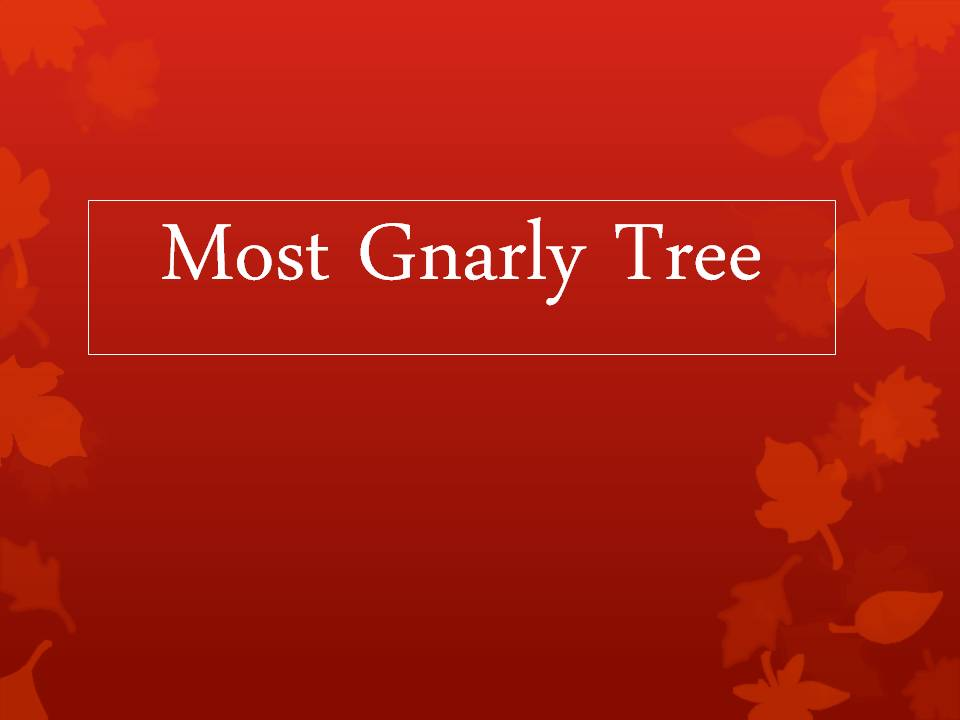 Winners of the 2012 Awesome Tree Contest